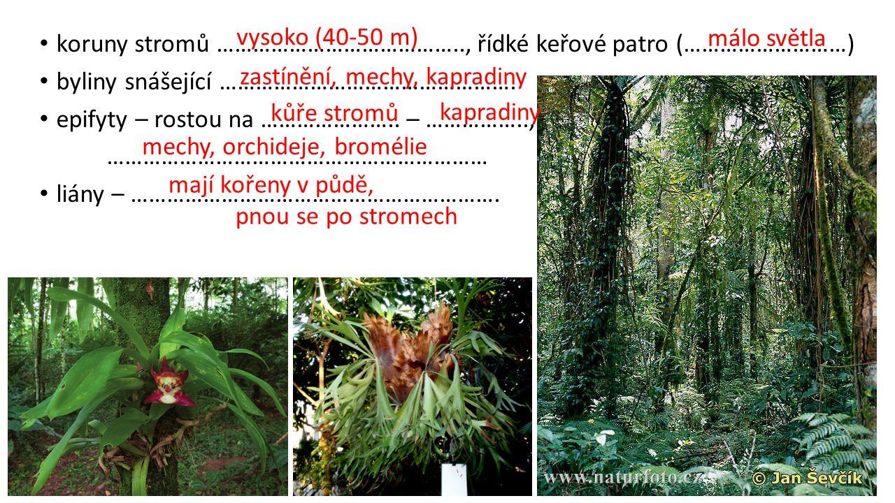 vysoko (40-50 m) málo světla. koruny stromů ………………………………….., řídké keřové patro (………………………) byliny snášející ………………………………………….