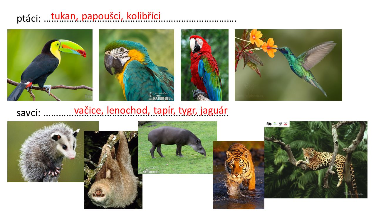 tukan, papoušci, kolibříci
