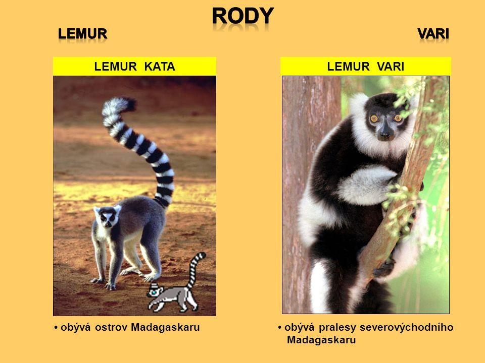 RODY LEMUR VARI LEMUR KATA LEMUR VARI • obývá ostrov Madagaskaru