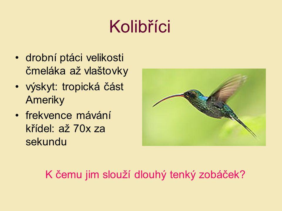 Kolibříci drobní ptáci velikosti čmeláka až vlaštovky