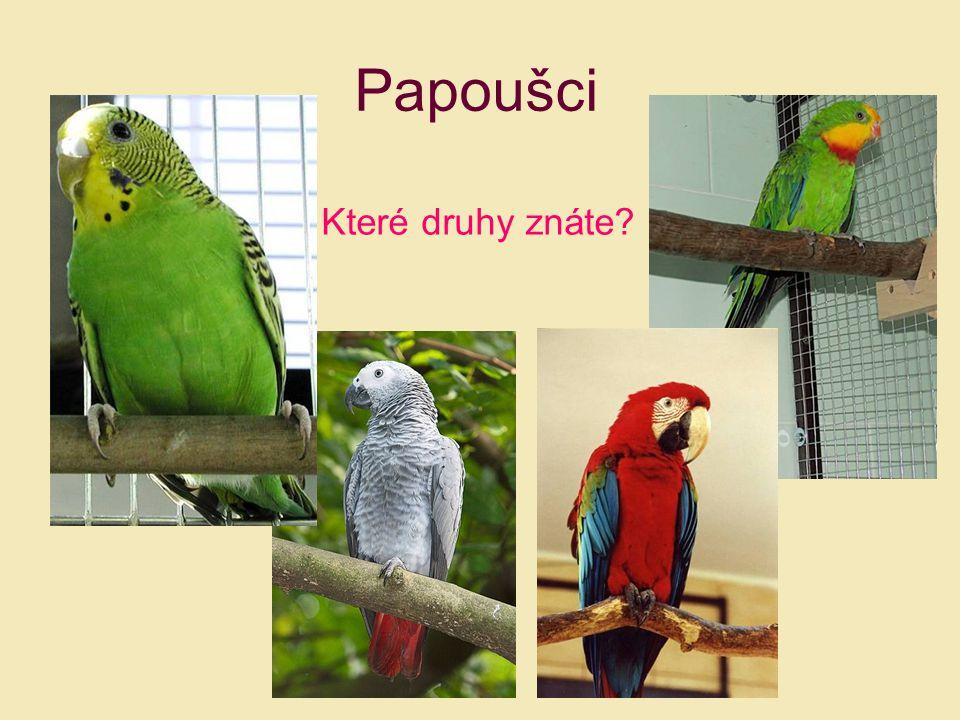 Papoušci Které druhy znáte