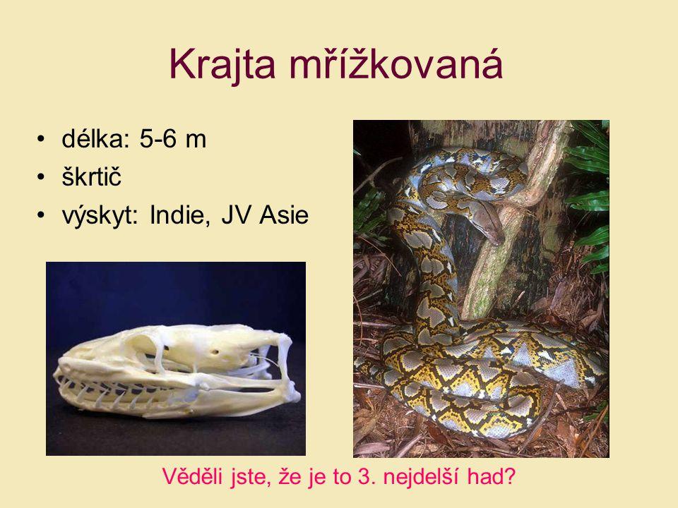 Krajta mřížkovaná délka: 5-6 m škrtič výskyt: Indie, JV Asie