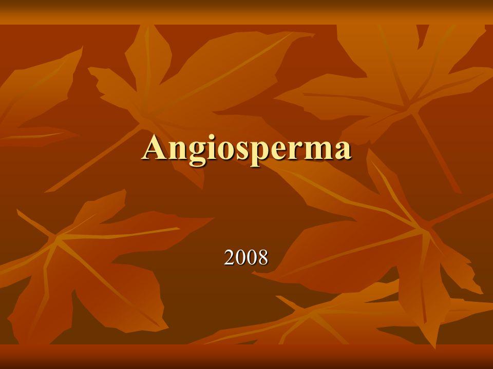 Angiosperma 2008