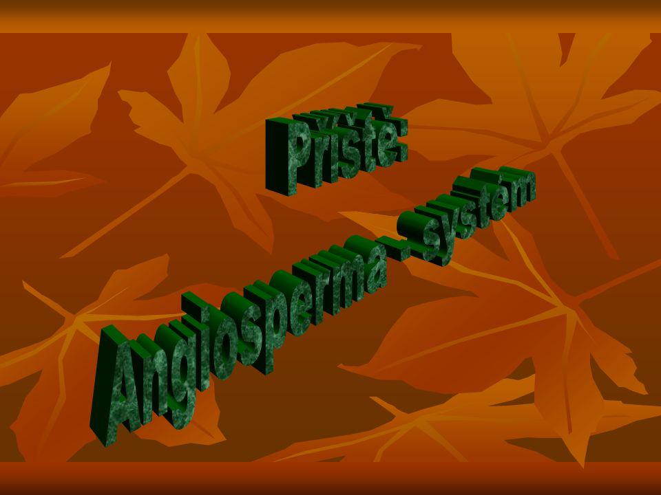 Příště: Angiosperma - systém
