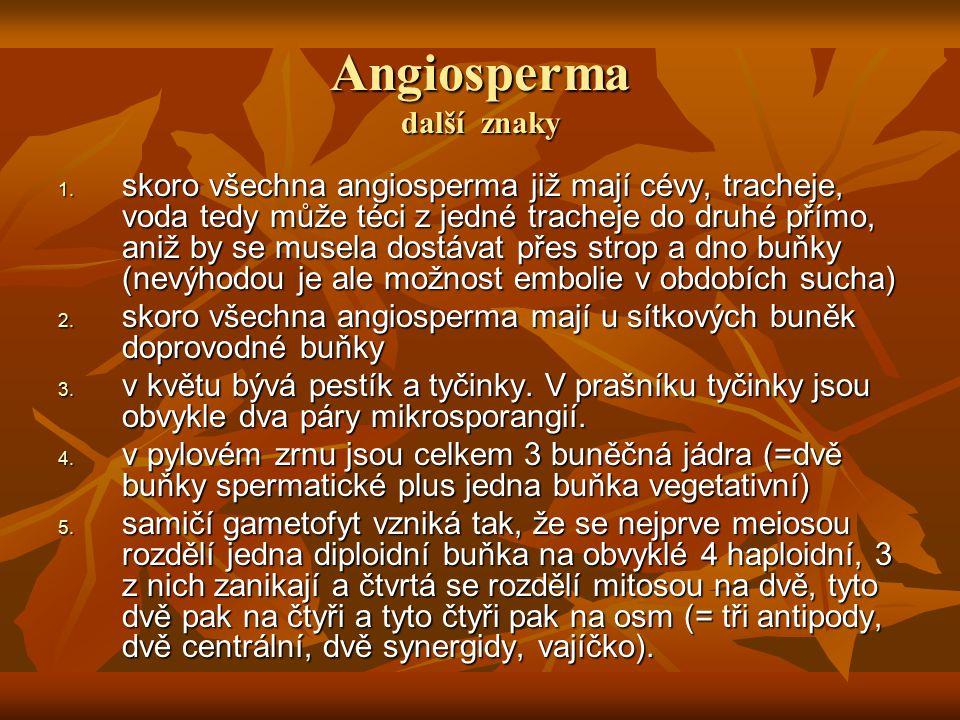Angiosperma další znaky