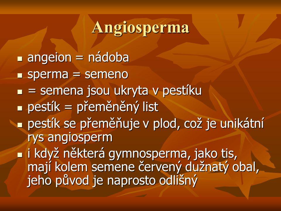 Angiosperma angeion = nádoba sperma = semeno
