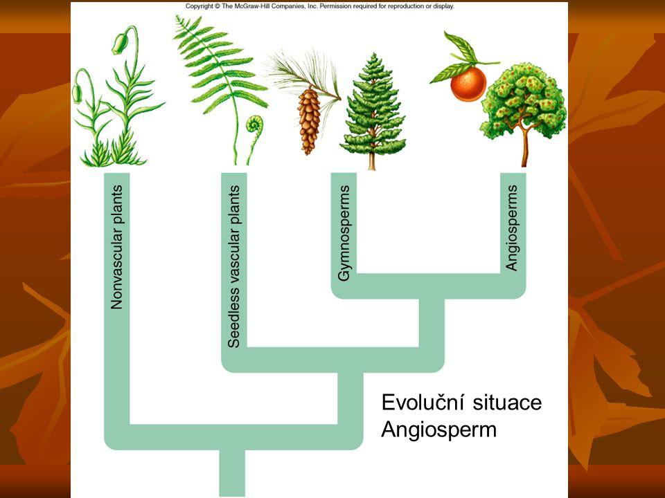 Evoluční situace Angiosperm