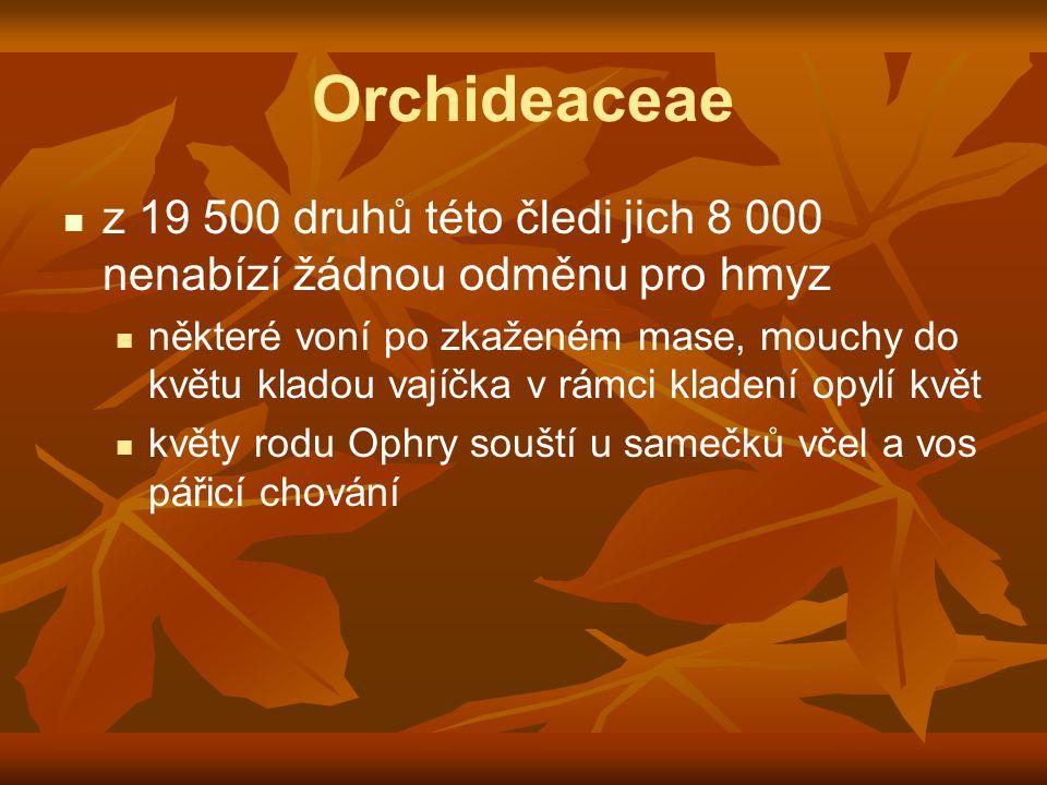 Orchideaceae z 19 500 druhů této čledi jich 8 000 nenabízí žádnou odměnu pro hmyz.