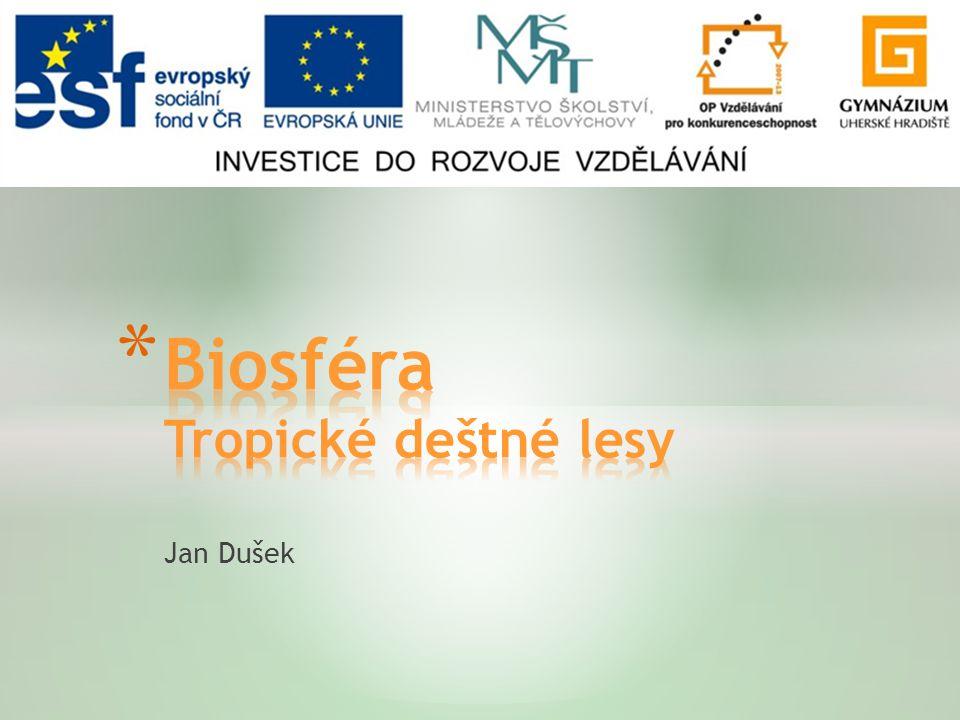 Biosféra Tropické deštné lesy