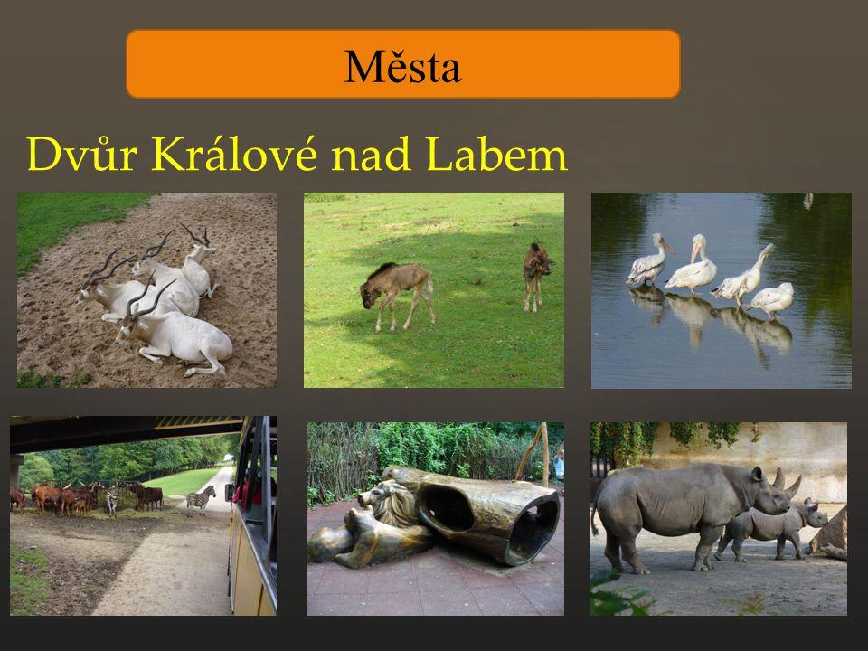 Města Dvůr Králové nad Labem