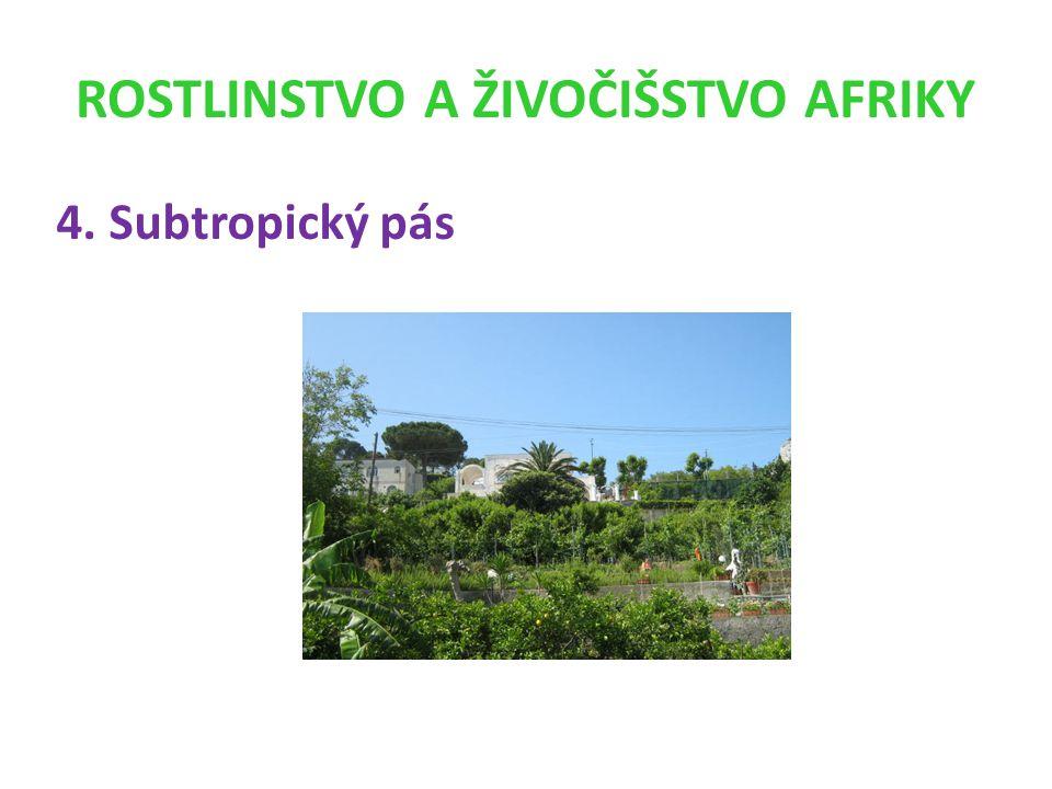 ROSTLINSTVO A ŽIVOČIŠSTVO AFRIKY
