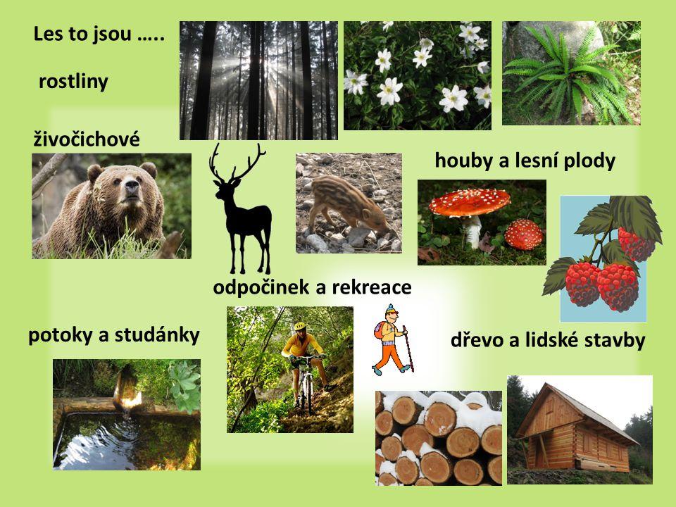 Les to jsou ….. rostliny. živočichové. houby a lesní plody. odpočinek a rekreace. potoky a studánky.
