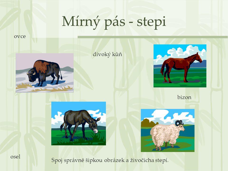 Mírný pás - stepi ovce divoký kůň bizon osel
