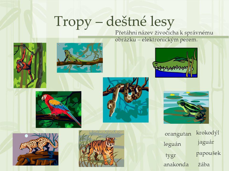 Tropy – deštné lesy Přetáhni název živočicha k správnému obrázku – elektronickým perem. orangutan.