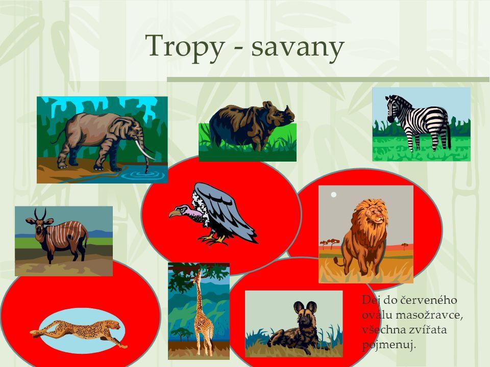 Tropy - savany Dej do červeného oválu masožravce, všechna zvířata pojmenuj.