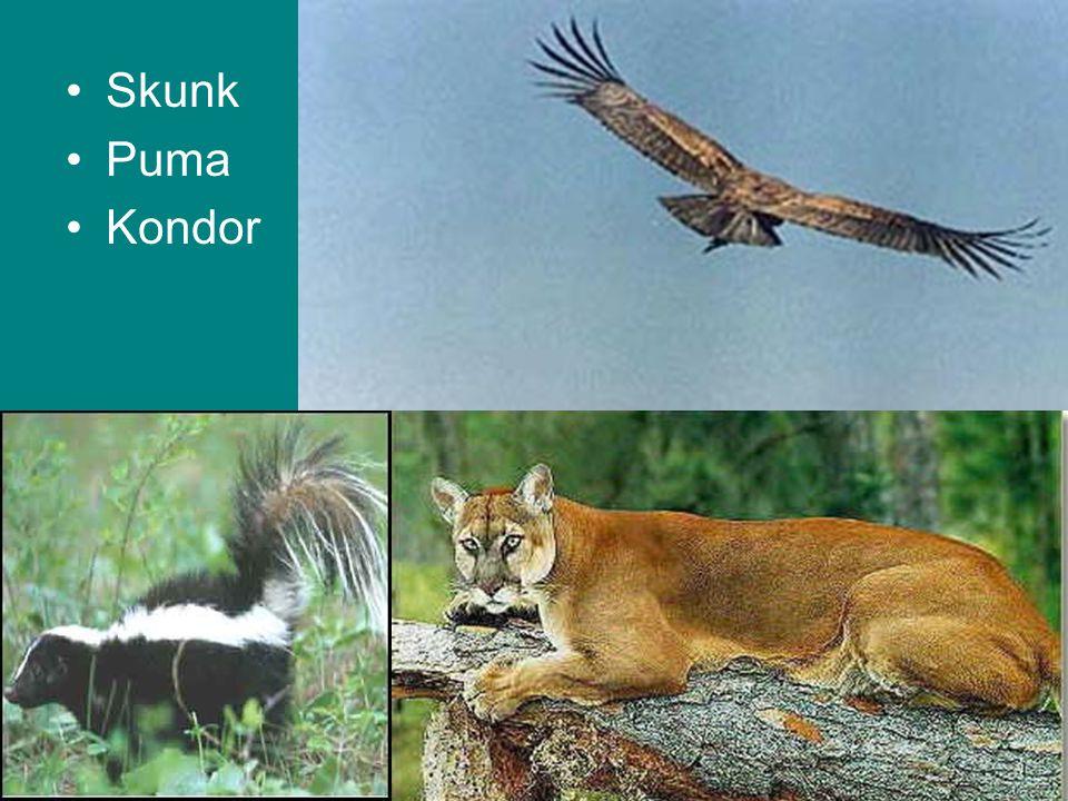 Skunk Puma Kondor