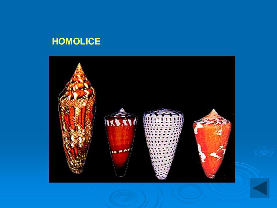 HOMOLICE