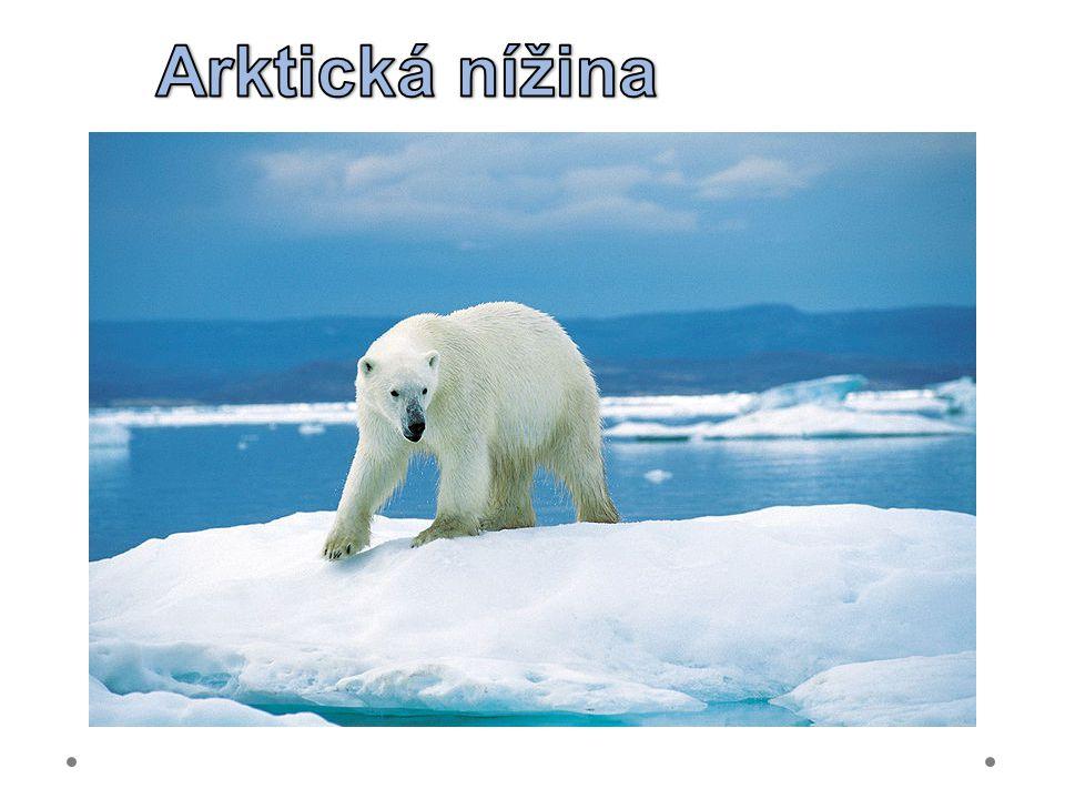 Arktická nížina 21.6.2012 Při Hudsonově zálivu