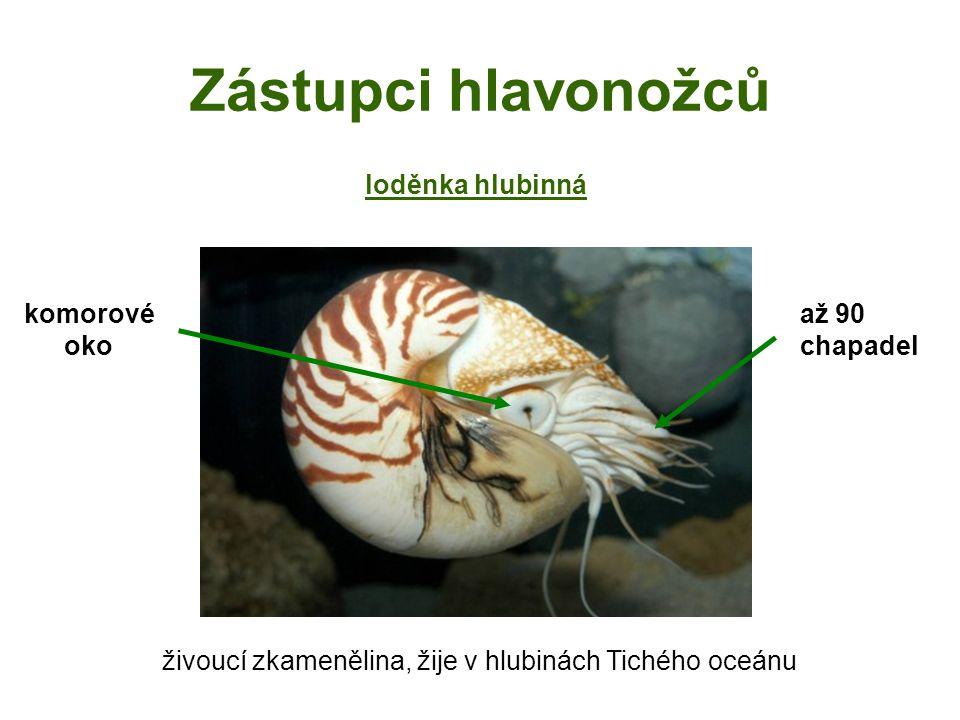 živoucí zkamenělina, žije v hlubinách Tichého oceánu