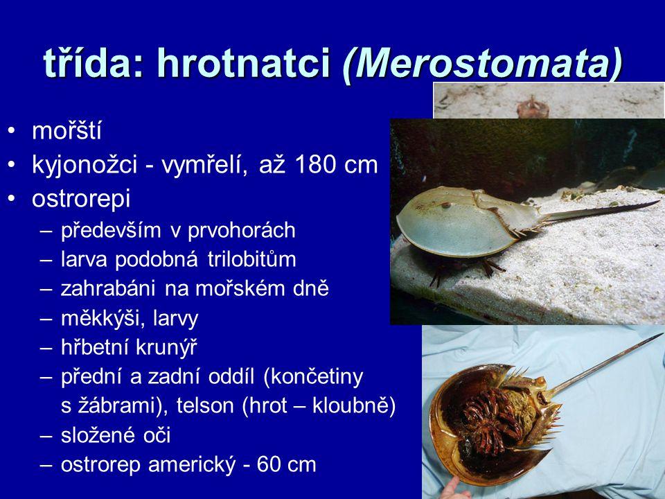 třída: hrotnatci (Merostomata)