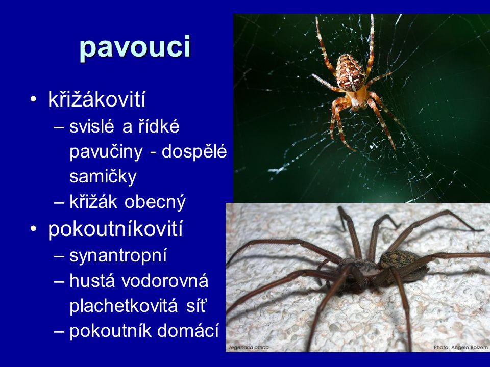 pavouci křižákovití pokoutníkovití svislé a řídké pavučiny - dospělé
