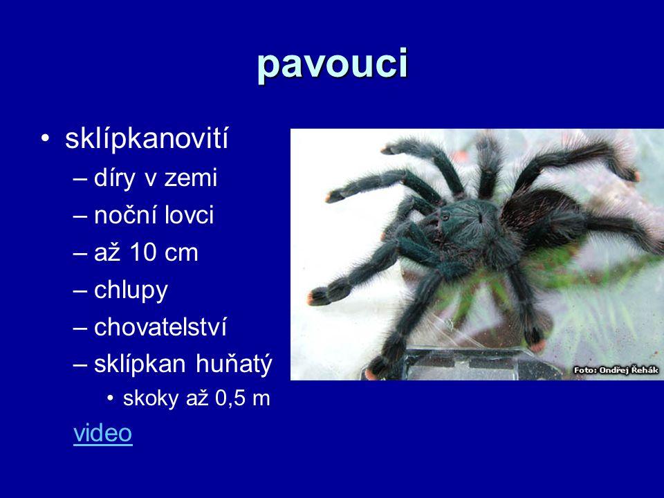 pavouci sklípkanovití díry v zemi noční lovci až 10 cm chlupy