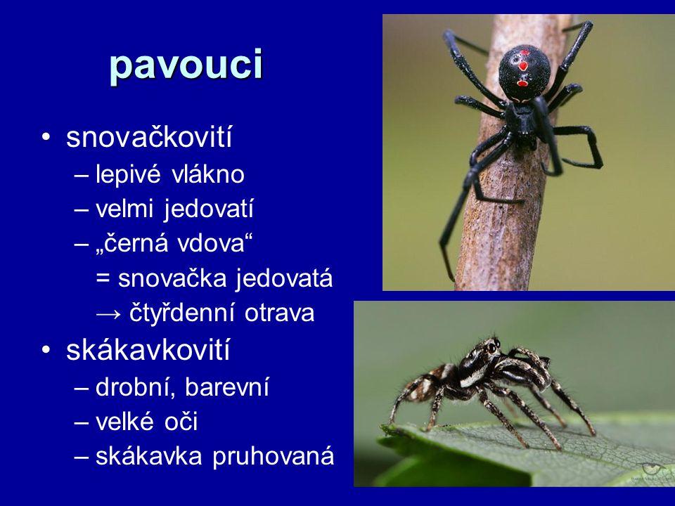pavouci snovačkovití skákavkovití lepivé vlákno velmi jedovatí