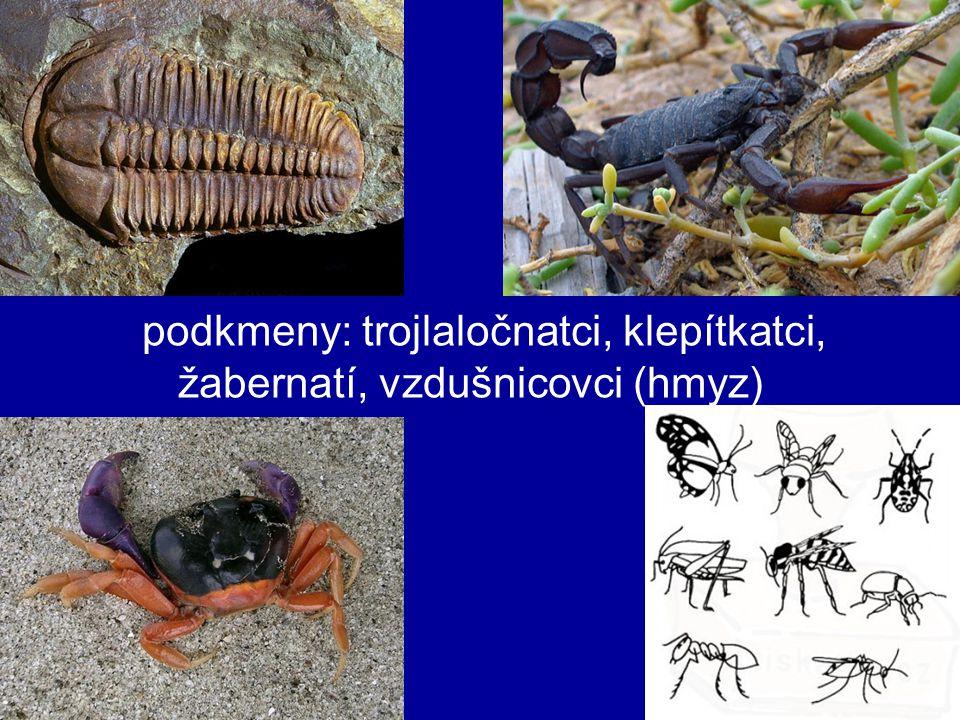 podkmeny: trojlaločnatci, klepítkatci, žabernatí, vzdušnicovci (hmyz)