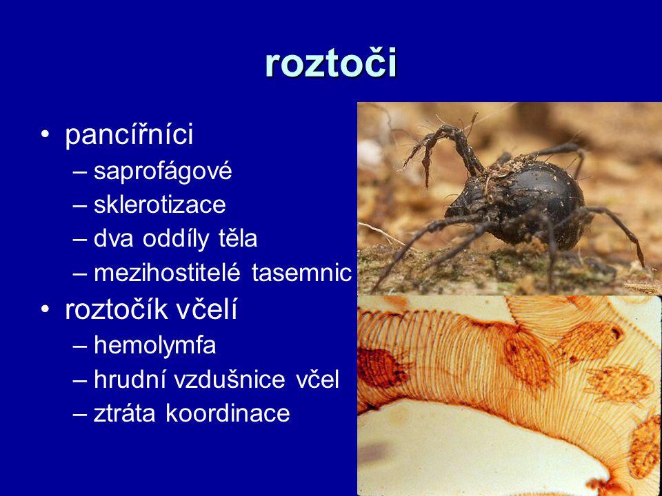 roztoči pancířníci roztočík včelí saprofágové sklerotizace