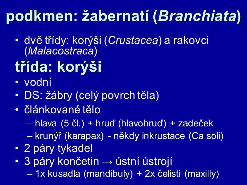 podkmen: žabernatí (Branchiata)