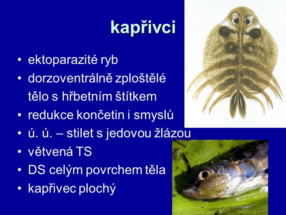 kapřivci ektoparazité ryb dorzoventrálně zploštělé