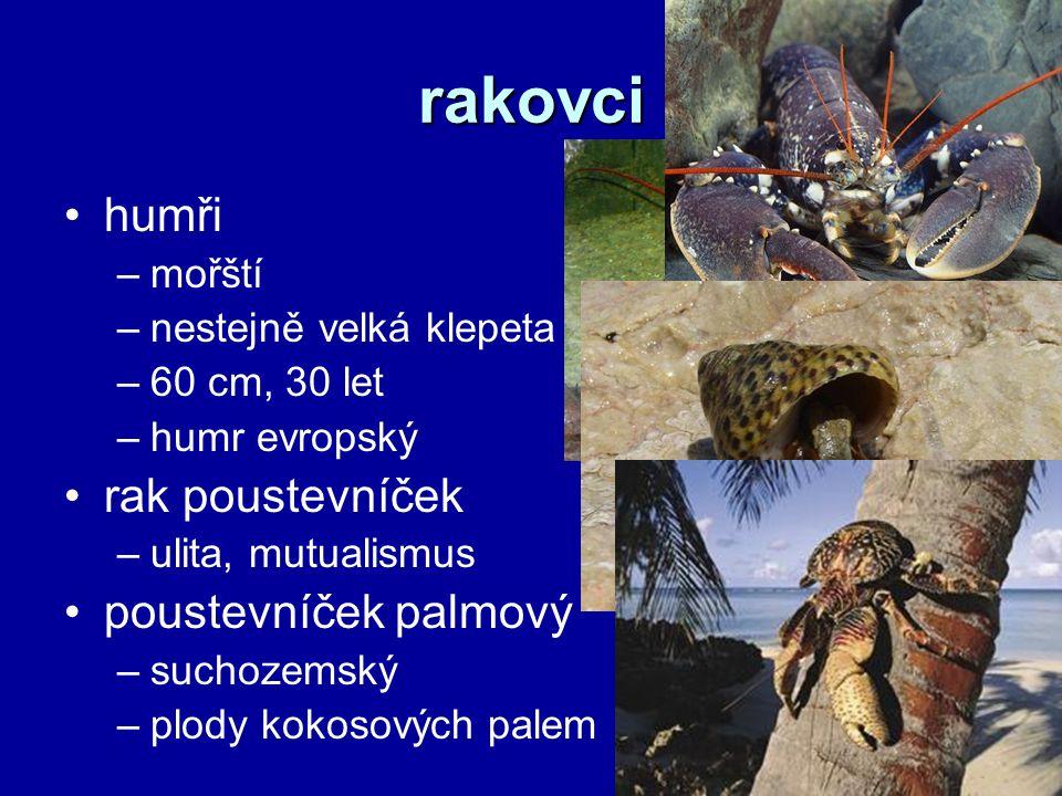 rakovci humři rak poustevníček poustevníček palmový mořští