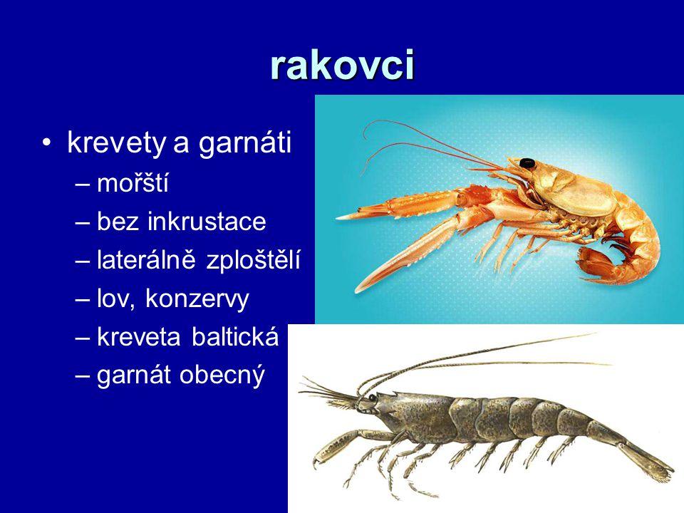 rakovci krevety a garnáti mořští bez inkrustace laterálně zploštělí
