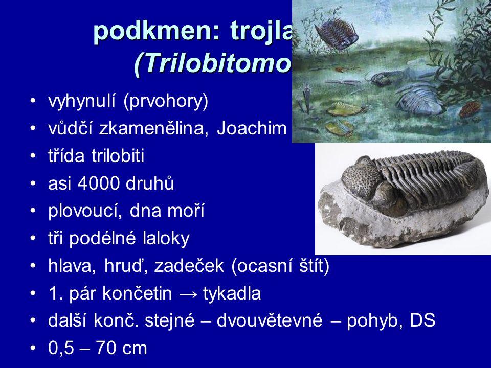 podkmen: trojlaločnatci (Trilobitomorpha)