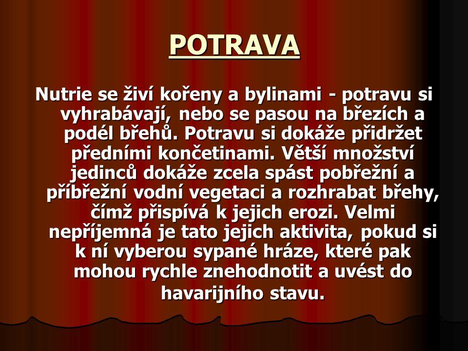 POTRAVA