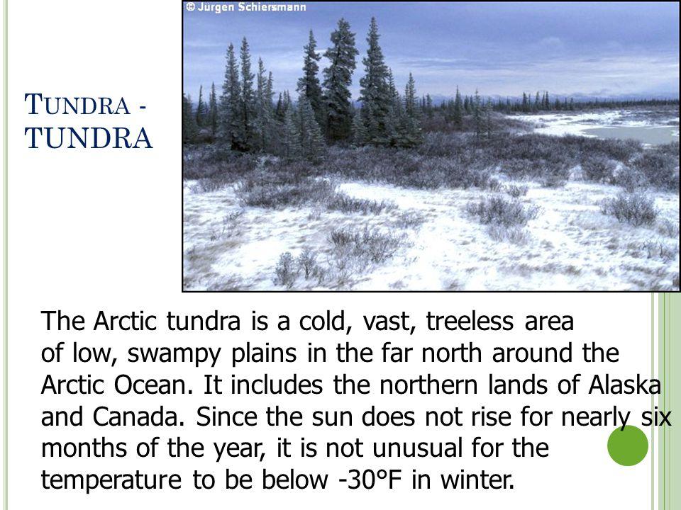 Tundra - TUNDRA The Arctic tundra is a cold, vast, treeless area