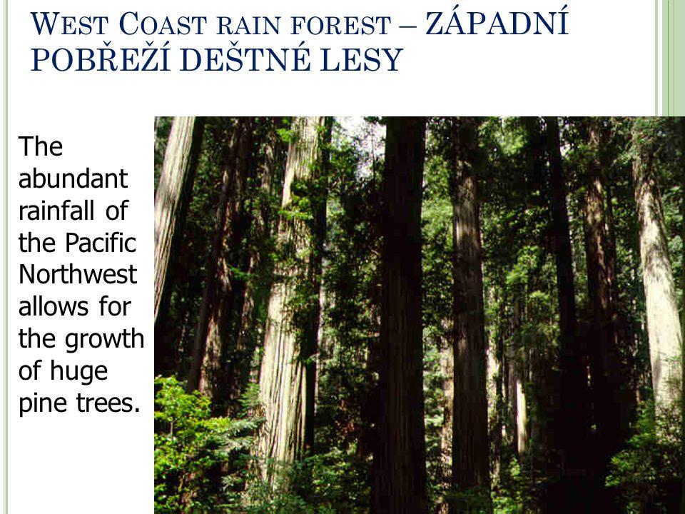 West Coast rain forest – ZÁPADNÍ POBŘEŽÍ DEŠTNÉ LESY
