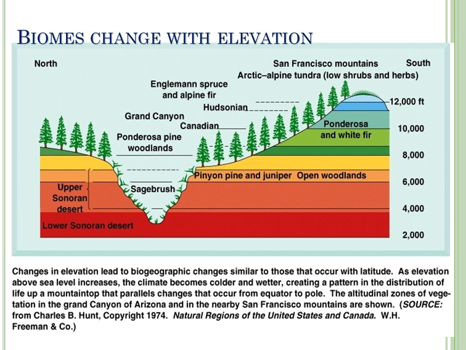Biomes change with elevation