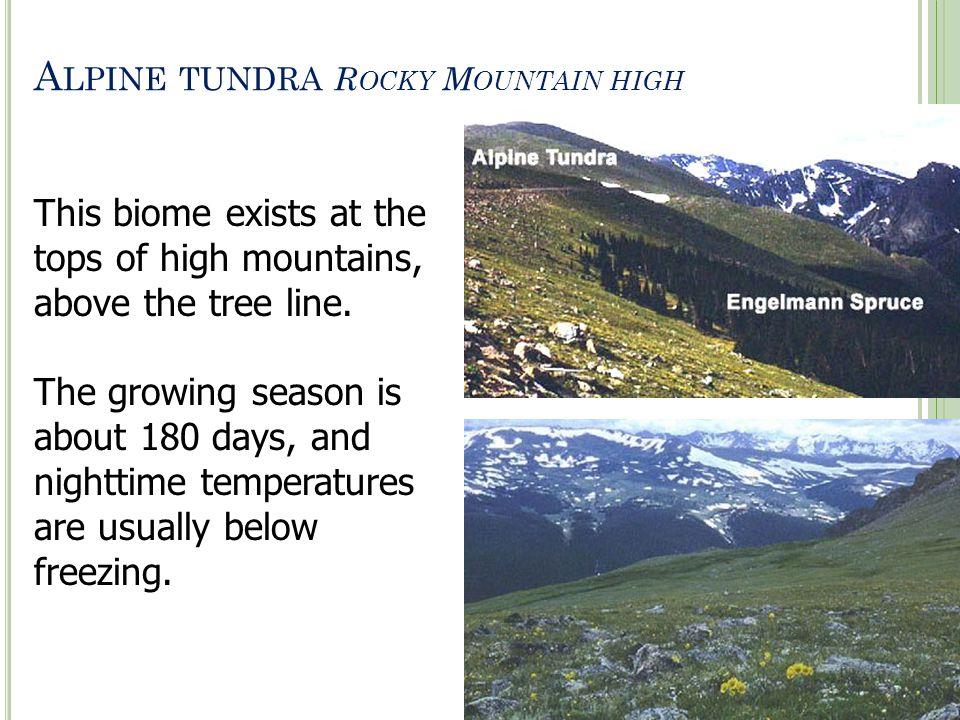 Alpine tundra Rocky Mountain high