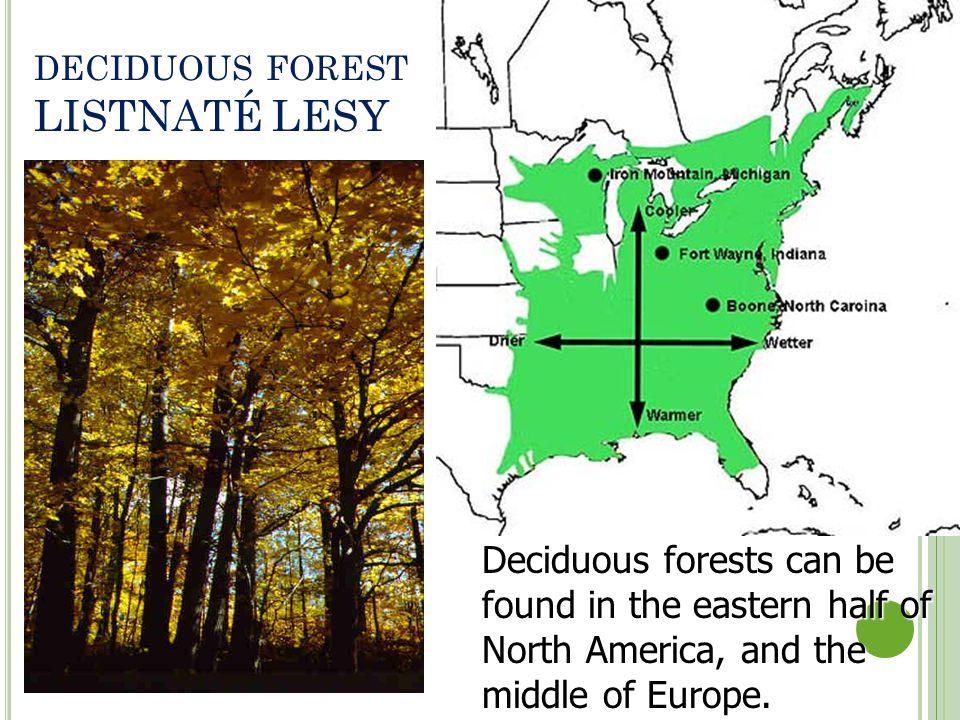 deciduous forest LISTNATÉ LESY