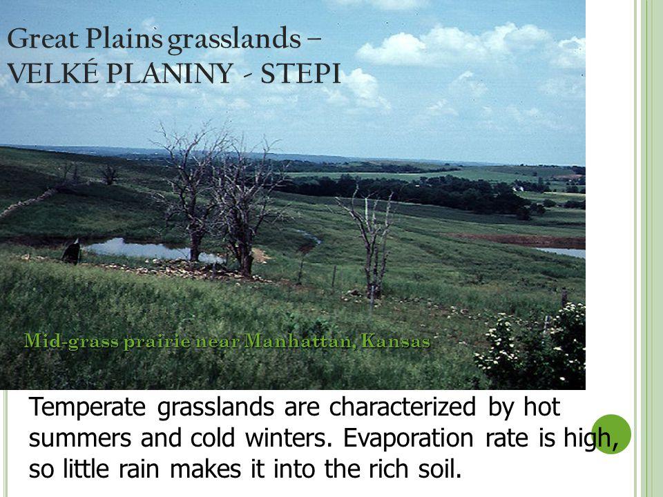 Great Plains grasslands – VELKÉ PLANINY - STEPI