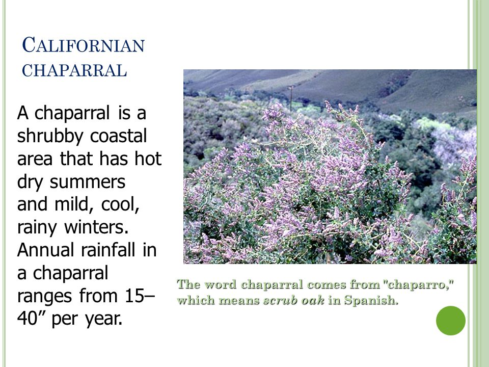 Californian chaparral