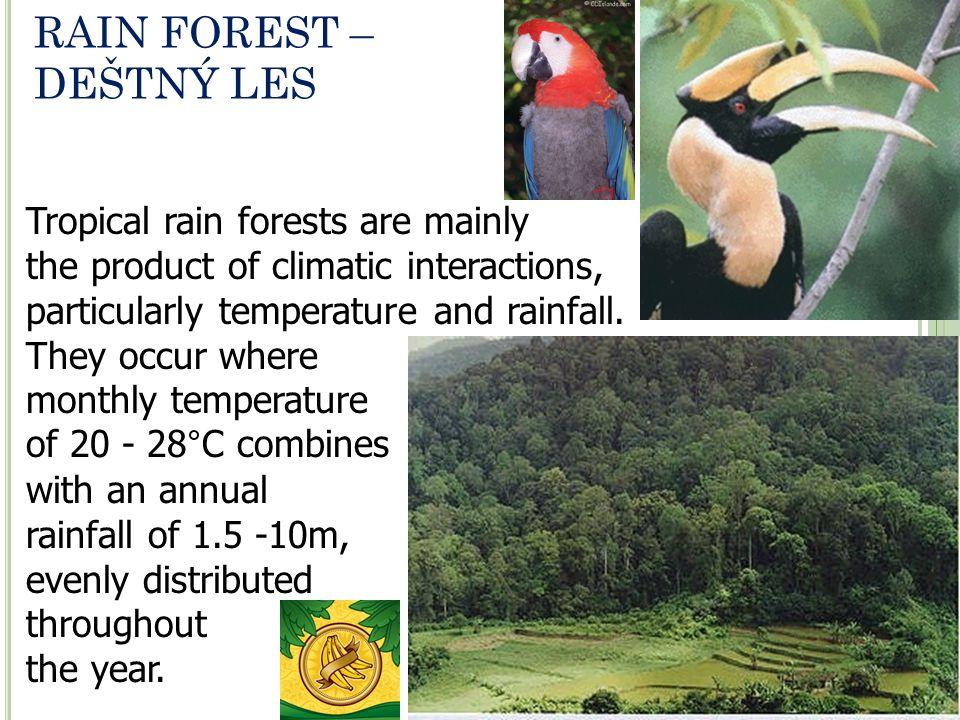 RAIN FOREST – DEŠTNÝ LES