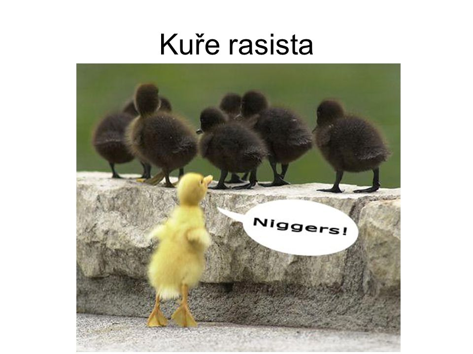 Kuře rasista