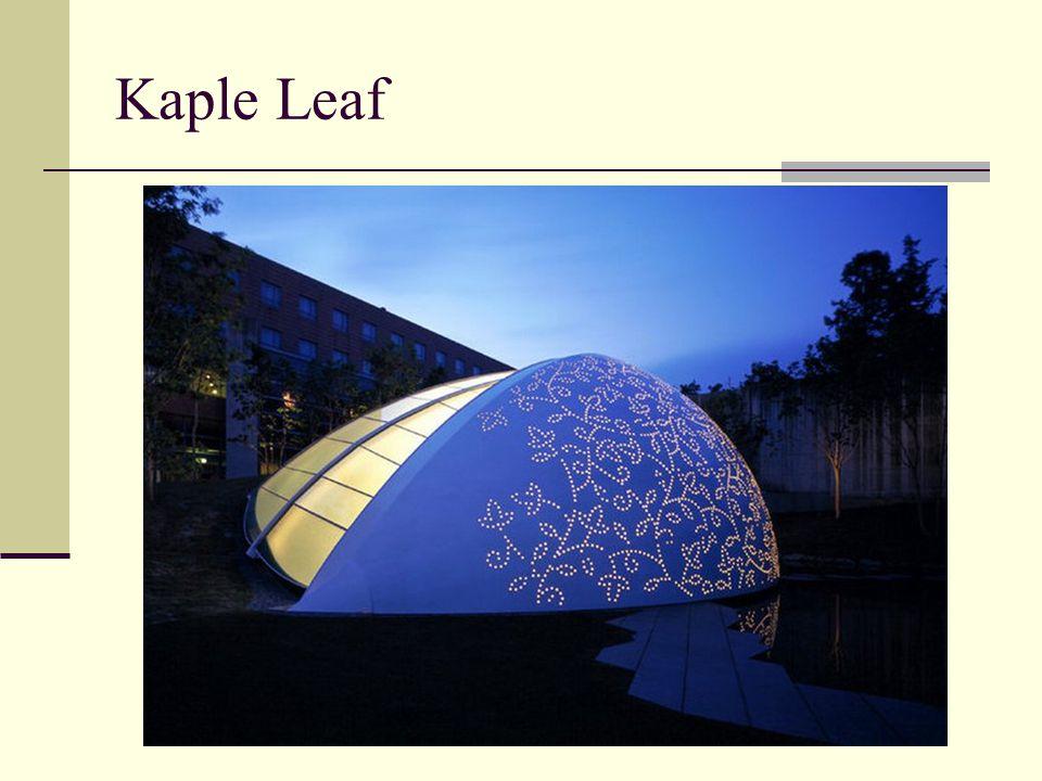 Kaple Leaf