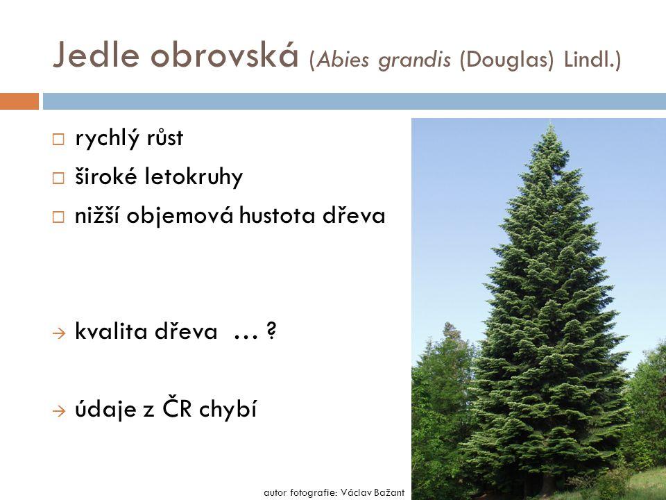 Jedle obrovská (Abies grandis (Douglas) Lindl.)