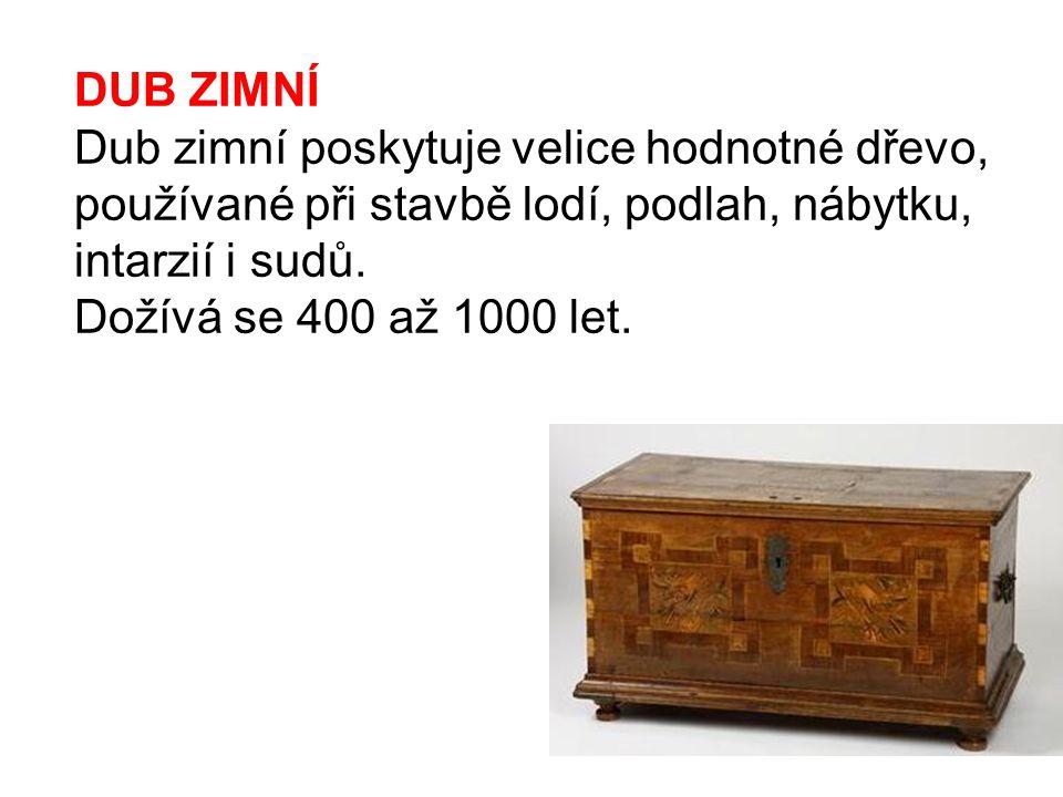 DUB ZIMNÍ Dub zimní poskytuje velice hodnotné dřevo, používané při stavbě lodí, podlah, nábytku, intarzií i sudů.