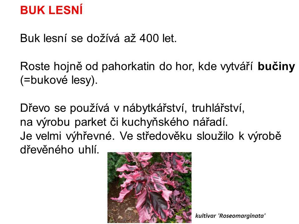 kultivar Roseomarginata