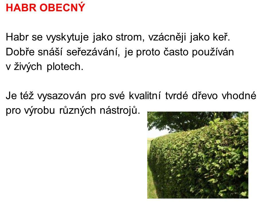 HABR OBECNÝ Habr se vyskytuje jako strom, vzácněji jako keř. Dobře snáší seřezávání, je proto často používán v živých plotech.