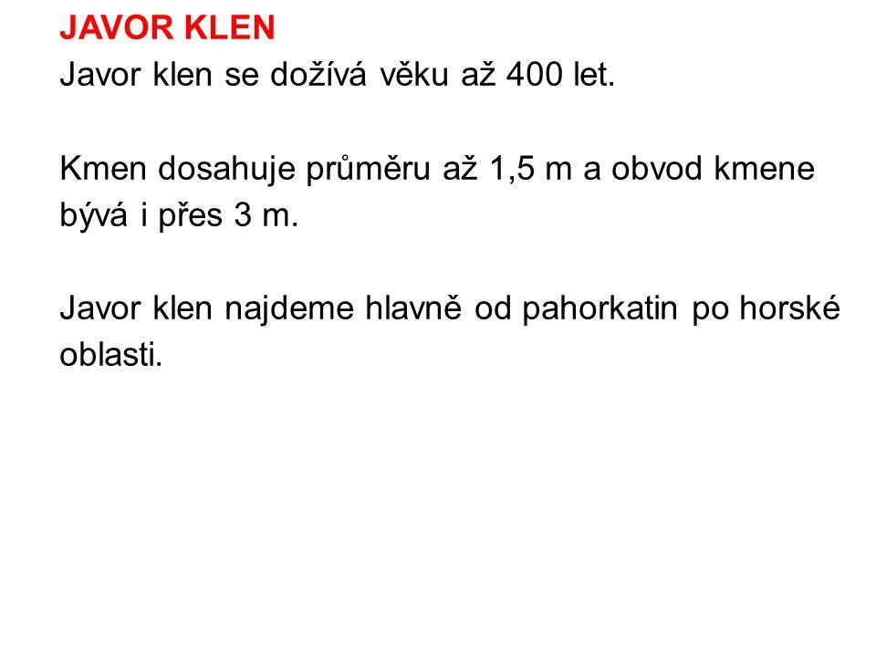 JAVOR KLEN Javor klen se dožívá věku až 400 let. Kmen dosahuje průměru až 1,5 m a obvod kmene bývá i přes 3 m.